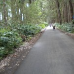 Mud lane